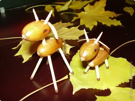 Поделка, изделие: Осенние поделки Материал природный.  Фото 2.