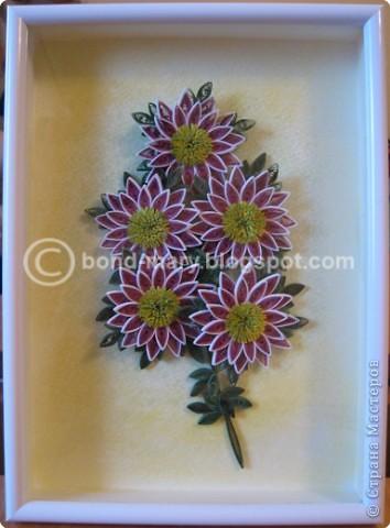 Мастер-класс,  Квиллинг, : Хризантемы сорта Two Tone Pink Бумага . Фото 1