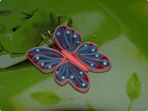 Мастер-класс,  Квиллинг, : Бабочка МК Квиллинг. Закончен наконец-то! Полосы бумажные . Фото 53