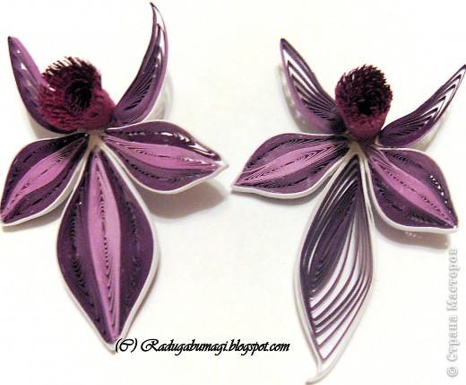 Квиллинг: Каттлея (лат. Cattleya) — семейство Орхидные. Фото 4