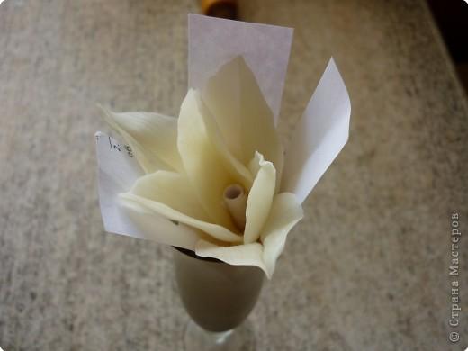 Мастер-класс Лепка: МК как сделать лилию Фарфор холодный. Фото 16