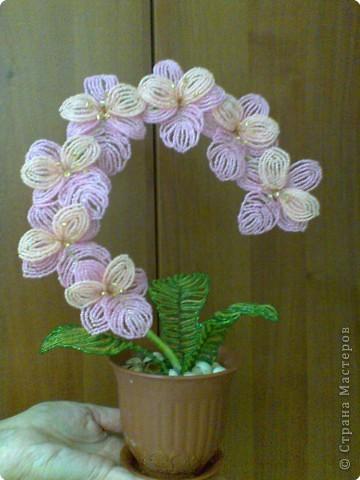 орхидея бисер схема