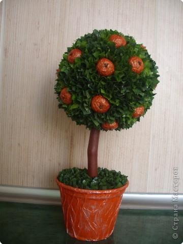 Мастер-класс Папье-маше, Торцевание: Апельсиновенькое деревцо мини МК Бумага, Гипс, Гуашь, Дерево, Материал бросовый, Материал природный День рождения. Фото 1