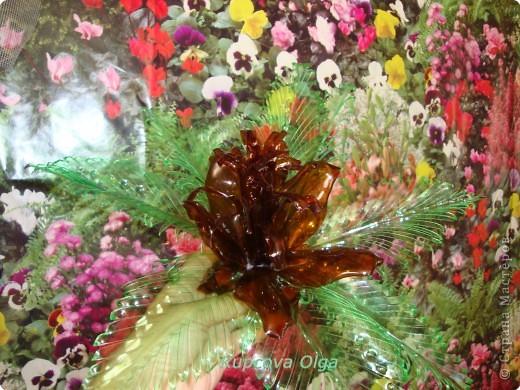 Поделка, изделие: Цветок из пластиковой бутылки№2 Бутылки. Фото 2