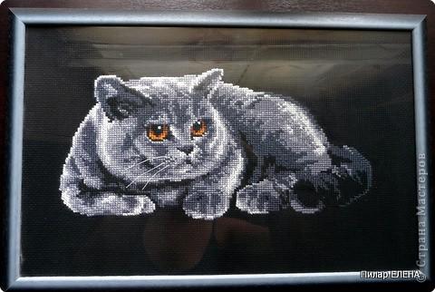 Схема вышивка красивого кота.