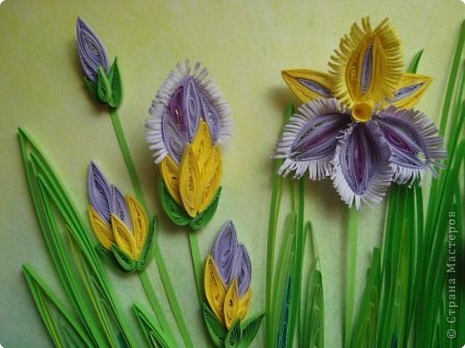Квиллинг: Ирисы. Пастель, Полосы бумажные 8 марта, День матери, День рождения, День учителя. Фото 3