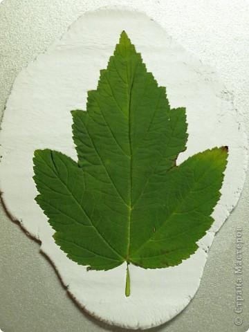 Мастер-класс Лепка: Девочки! Находка! Заинтриговала? заходите)))) Листья. Фото 4