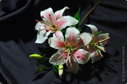 Ещё одна лилия.. Фото 2