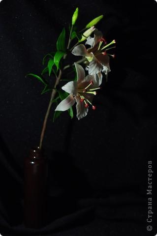 Ещё одна лилия.. Фото 3