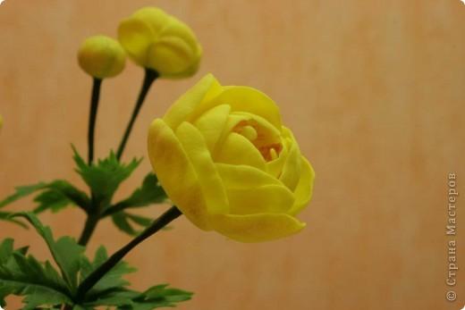 У меня есть одно из теплых воспоминаний детства, проведенного в Подмосковье - красивые желтые цветы...которые ни в коем случае нельзя было срывать, ведь они занесены в Красную Книгу! И назывались они так интересно - КУПАЛЬНИЦА.... Старинная германо-скандинавская легенда рассказывает, что в каждом цветке этого растения живет эльф - сказочное существо, дух природы. Внешне эльфы очень напоминают людей, однако их рост намного меньше человеческого. Эльфы обладают многими талантами и владеют кузнечным, ювелирным, ткацким и некоторыми другими ремеслами. Они исполняют чудесные мелодии и песни, замечательно танцуют, а также изготавливают волшебные вещи: оружие, ювелирные украшения, амулеты, с помощью которых проявляют свою магическую силу. Летними ночами эти крошечные человечки варят в округлых, ярко-желтых цветках, похожих на золотые сосуды, волшебный эликсир. Вдоль длинных цветоносов купальницы расположены лестницы, по которым вверх и вниз снуют десятки эльфов, доставляя ингредиенты, необходимые для приготовления магического напитка. С наступлением утра маленькие труженики разливают эликсир по крохотным бутылочкам и прячутся в своих домиках. Думаю, я предоставила вам достаточно информации, чтобы вас, также как и меня, охватило огромное желание слепить этот цветок. Ну надо же в конце-то концов понаблюдать за маленькими труженниками - эльфами? :)
