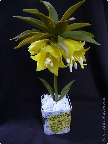 Вот рябчики я люблю, чего не могу сказать об орхидее! Поэтому лепила их с огромным удовольствием! Не совершенство конечно, зато есть к чему стремиться.. Фото 1
