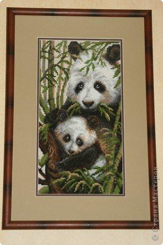 Картина, рисунок, панно Вышивка крестом: Панда с детенышем Канва.