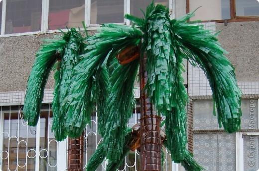 Пальма из пластиковой бутылки своими руками фото