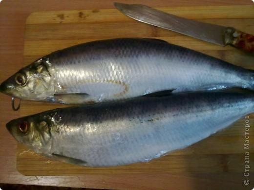 Кулинария, Мастер-класс Рецепт кулинарный: самодельная скумбрия в масле+ маленький МК Продукты пищевые. Фото 2
