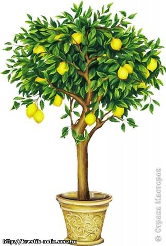 Картина, панно, Мастер-класс, Поделка, изделие Лепка: Лимонное дерево, или как его делала я Тесто соленое 8 марта, День рождения, День учителя. Фото 2