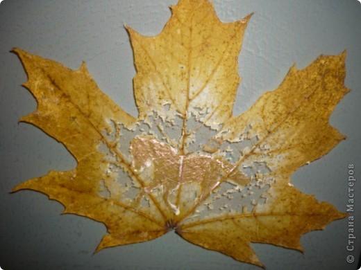 Скелетированных листьев своими руками