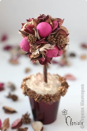 Кофейное дерево топиарий из кофе