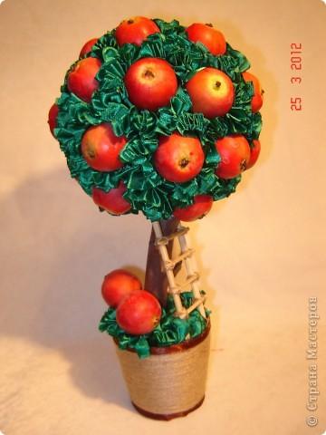 Поделка, изделие Папье-маше, Торцевание: Яблочный топиарий Гипс, Ленты, Шпагат Праздник осени. Фото 1