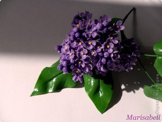 Флористика Лепка: Сирень Фарфор холодный. Фото 1