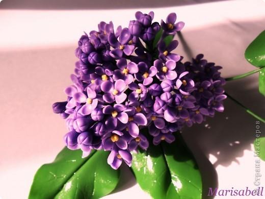 Флористика Лепка: Сирень Фарфор холодный. Фото 2