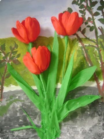 Тюльпаны. Фото 1