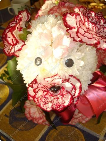 Флористика собачка из цветов подарок на день