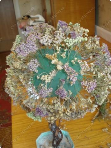 Мастер-класс: МК Морского дерева Ракушки Дебют. Фото 6
