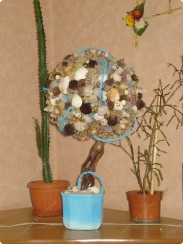 Мастер-класс: МК Морского дерева Ракушки Дебют. Фото 1