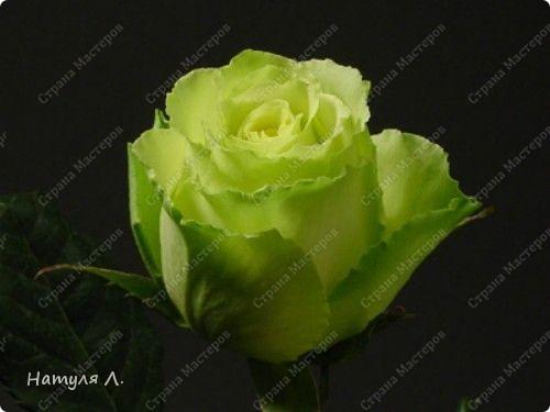 Флористика Бумагопластика: Розовое дерево (+мини МК) Дерево, Салфетки 8 марта, Валентинов день, День рождения. Фото 10
