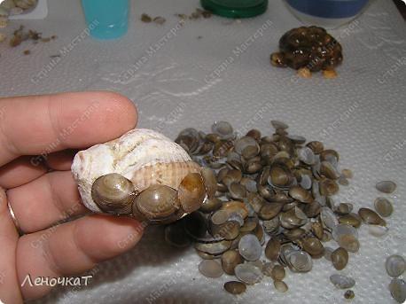 Черепахи из ракушек своими руками 79