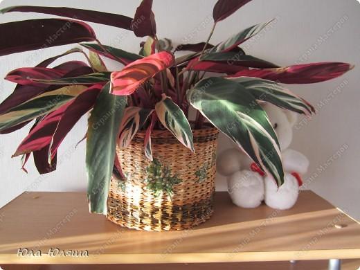 Вдохновилась работами Тани Павловны и решила повторить ее идею кашпо без дна. Накрасила трубочки из чековой ленты морилками водными цвета дуб, дуб+вода и дуб+палисандр. Фото 15