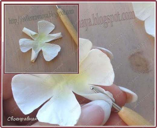 Мастер-класс Бумагопластика: Цветы из бумаги Бумага Свадьба. Фото 10