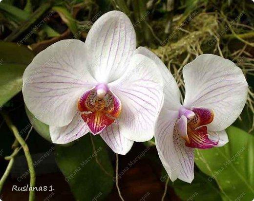 Просили мк орхидеи-выкладываю. фото 6