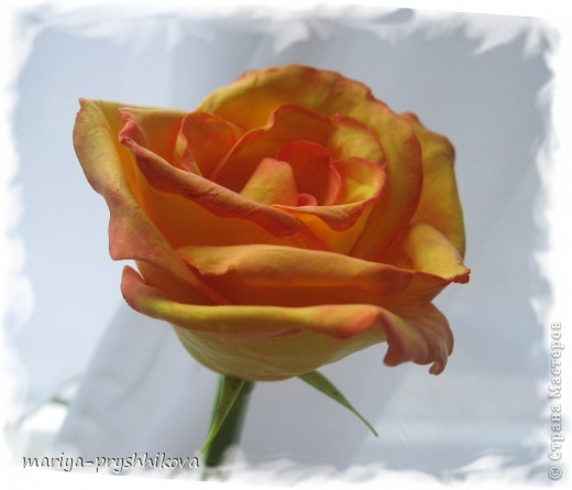 Мастер-класс,  Лепка, : Роза с градиентной расцветкой. МК Пластика . Фото 1