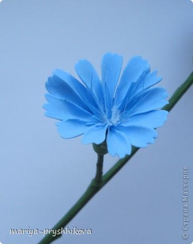 Флористика Лепка: Цикорий.МК Пластика. Фото 1
