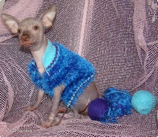 Мастер-класс Вязание спицами: Вяжем комбинезон для собаки. Пряжа. Фото 1