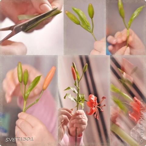 Мастер-класс Лепка: Все покрасочные работы по лилии Фарфор холодный. Фото 6