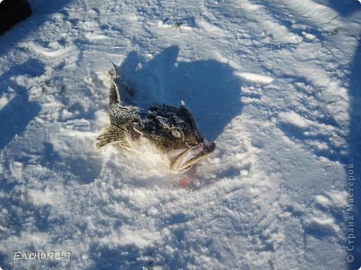 Фоторепортаж как мы корюшку ловили фото 24