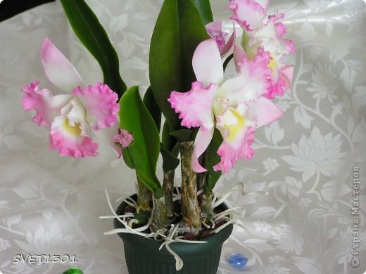 Поделка, изделие Лепка: Королева цветов: орхидея Фарфор холодный 8 марта, День рождения. Фото 5
