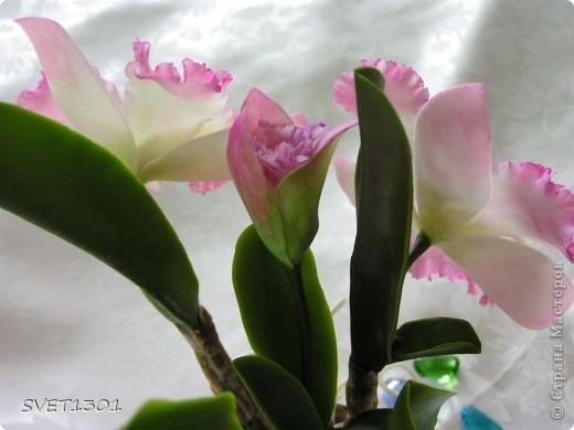 Поделка, изделие Лепка: Королева цветов: орхидея Фарфор холодный 8 марта, День рождения. Фото 7