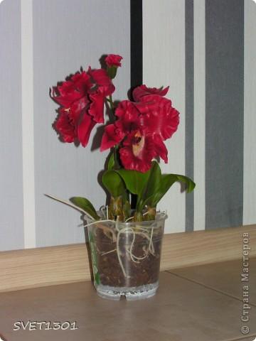 Мастер-класс Лепка: МК по лепке орхидеи. Фарфор холодный. Фото 1