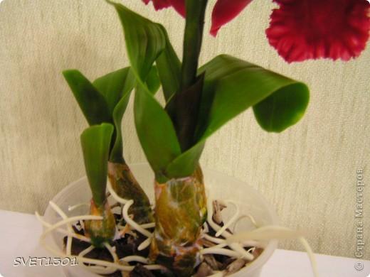 Мастер-класс Лепка: МК по лепке орхидеи. Фарфор холодный. Фото 28