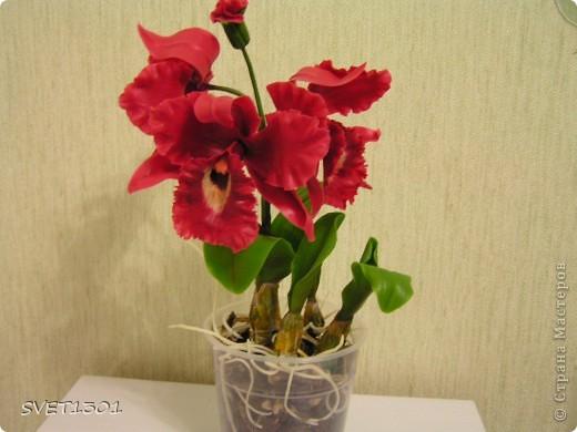 Мастер-класс Лепка: МК по лепке орхидеи. Фарфор холодный. Фото 29