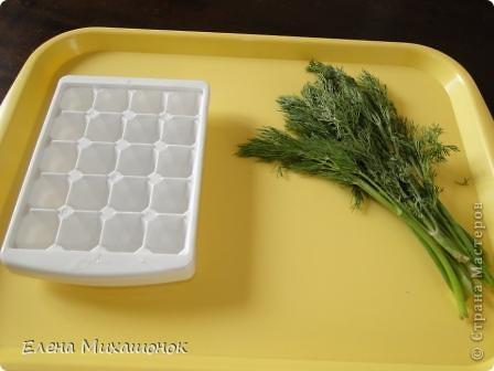 Готовим кубики льда с зеленью для супчиков... Нам понадобится емкость для льда... и зелень (укроп, петрушка). Фото 1