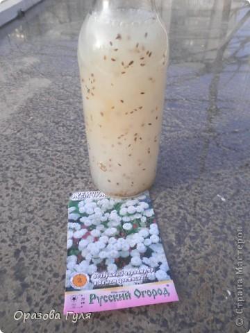 Мелкие семена трудно посадить ровненько. Вот я с вечера залила семена водой для набухания.. Фото 4