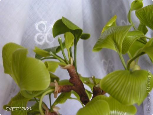 Поделка, изделие Лепка: Вуаля-опять бонсай! Фарфор холодный 8 марта, День рождения. Фото 8