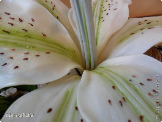 Поделка, изделие, Флористика Лепка: Лилия в кокосовой скорлупе Фарфор холодный. Фото 8