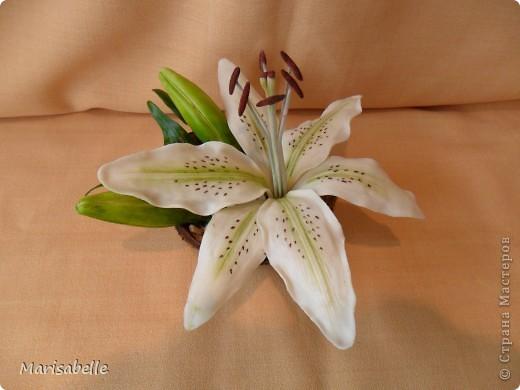 Поделка, изделие, Флористика Лепка: Лилия в кокосовой скорлупе Фарфор холодный. Фото 6
