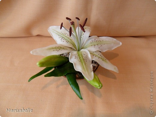 Поделка, изделие, Флористика Лепка: Лилия в кокосовой скорлупе Фарфор холодный. Фото 7