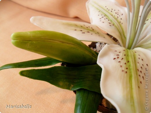 Поделка, изделие, Флористика Лепка: Лилия в кокосовой скорлупе Фарфор холодный. Фото 9